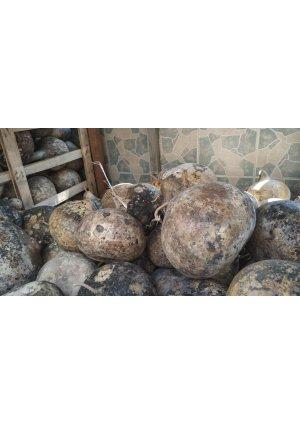Ham su kabağı armut tip 70x25…